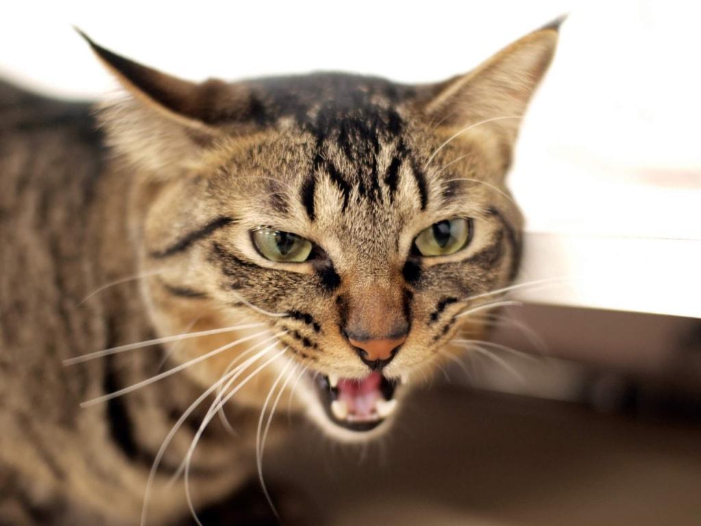 夢占い◆猫に威嚇される夢の意味