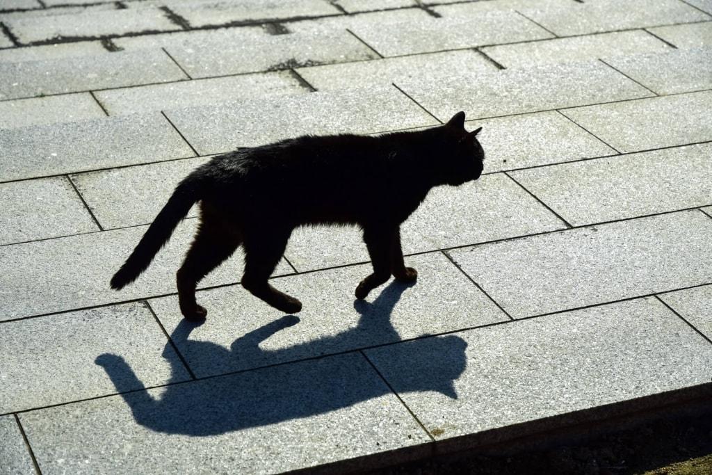 夢占い◆黒猫の夢の意味