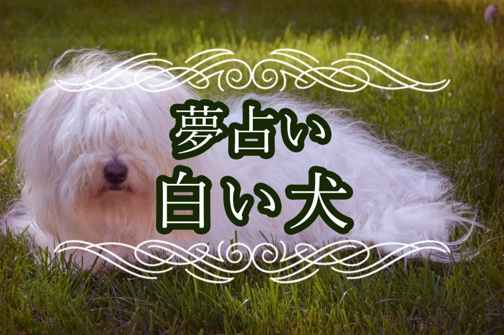 【夢占い】白い犬の夢は幸運のスピリチュアルサイン!?金運アップの夢?