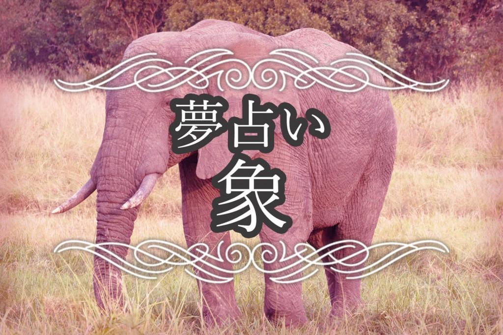 夢占い・象の夢の意味。泳ぐ象や飛ぶ象など象を見る夢が暗示する内容