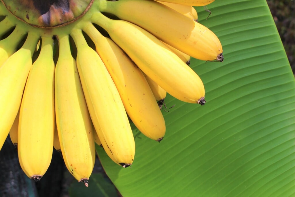 朝バナナダイエットのやり方