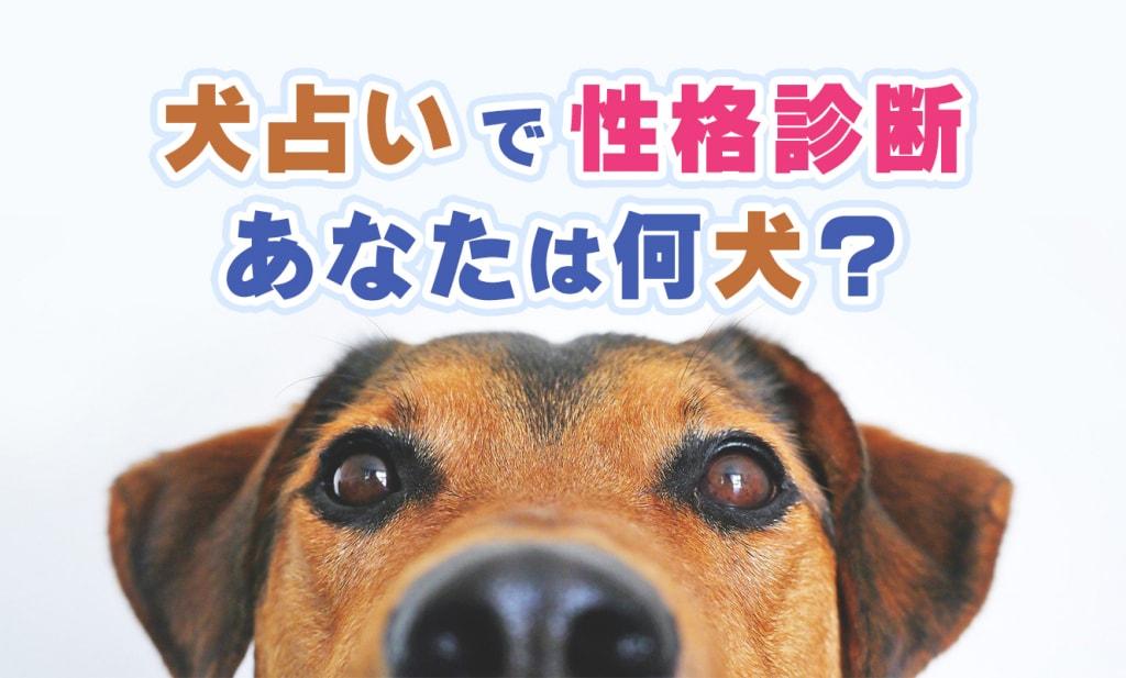 【犬占い】あなたは何犬?簡単無料の犬占いで性格診断!