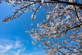 今日も一日HAPPYに【気学】(2021年4月9日の運勢)希翔の毎日メッセージ