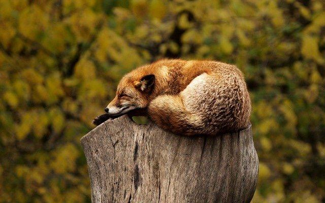 眠れない日が続く(1)大規模な世界線移動時「ここに留まる」人は眠れない、それでいい【辛口オネエ】